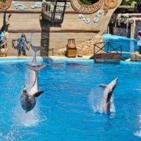 Дельфины :: Игорь Шулья
