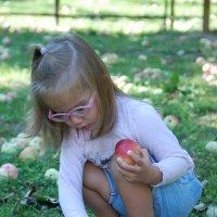 кому яблок :: Марина Баукина