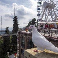 Птица мира :: Андрей Шаронов