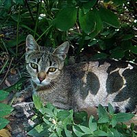 Котёнок в листочках :: Нина Корешкова