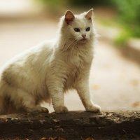 кошка :: Вадим Виловатый