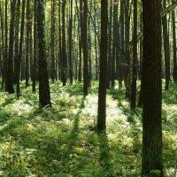 Юдинский лес в сентябре :: Наиля