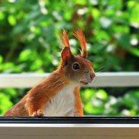 её в дверь, она в окно :: nikolas lang