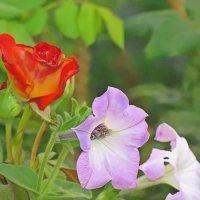 осенние цветы :: Александр Корчемный