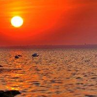 Южный закат :: Владимир Кочнев