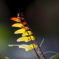 Вот такой вот цветок ! :: Евгений Ананевский