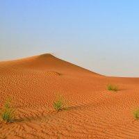 Пустыня :: Андрей Гомонов