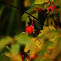 Вот и осень.... :: Cветёлка ***
