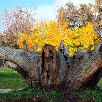 Осенняя лампада :: Виктор Пегета