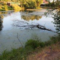 Старый пруд :: Наталья Гусева
