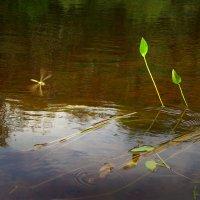 Полет над водою :: Валерий Талашов