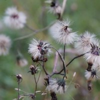 осень :: лина сергеева
