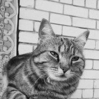 Кошка на крыльце :: Ирина Крохмаль