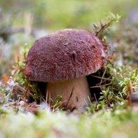 В лесах Карелии... :: Сергей