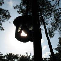 Солнечный фонарь :: Дмитрий Сухарев