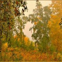 За завесою  тумана....спит осенний лес :: galina tihonova
