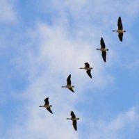 Снова птицы в стаи собираются... :: Танюша Коc