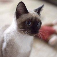Кошки мышки :: Светлана Мещан