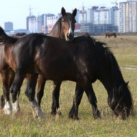 лошадиный флирт :: Олег Петрушов