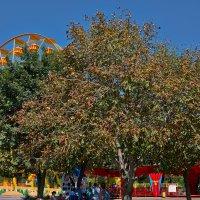 спасительная тень деревьев... :: Валерий Дворников