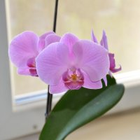 орхидея :: vlad10787 kekshtas