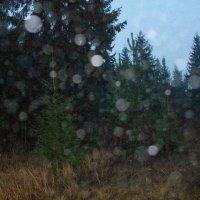 Лесные духи (ОРБЫ) :: Виктор Елисеев