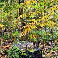 Осенний лес :: Ольга Русанова (olg-rusanowa2010)