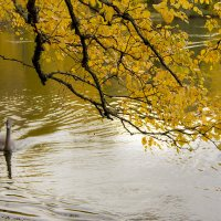 Его первая осень... :: Bosanat