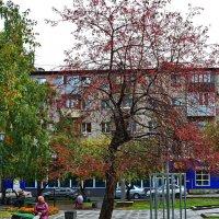 Осень,она у каждого своя... :: Владимир Михайлович Дадочкин