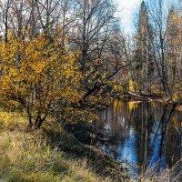 Осень пришла :: Валентина Илларионова (Блохина)