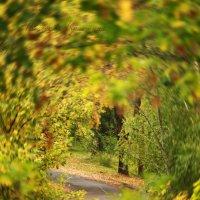 Золотая осень :: Кристина Щукина
