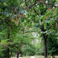 Прогулка в монастырском урочище... :: Тамара (st.tamara)