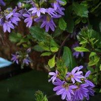 Цветы над водой :: Дмитрий Лебедихин