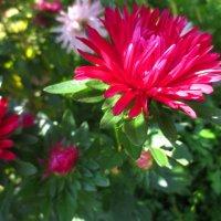 Осенние цветы :: Любовь