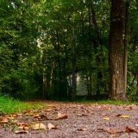 Осень в городе :: Олеся Семенова
