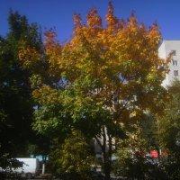 Осень в городе гуляет :: Tarka