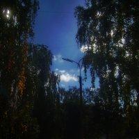 Дневной сон уличного фонаря в окружении берёз. :: Tarka