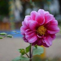 Цветок :: Елена Зенкина