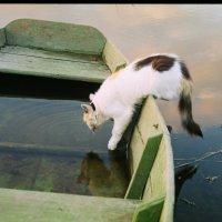 Кошка пьет Оку :: Олег Романенко