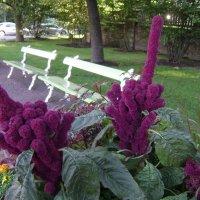 хулиганские цветы :: Марина Домосилецкая