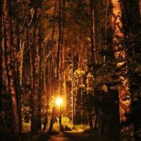 Ночью в парке :: Лидия (naum.lidiya)