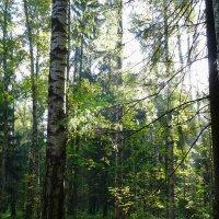 В лесу :: Наталия Короткова