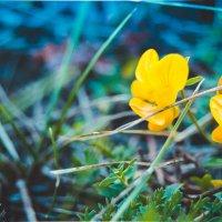 Осенние цветы :: Дмитрий Тарарин