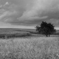 дерево :: Злата Красовская
