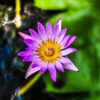 Водяная лилия :: Ксения Базарова
