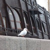 Корвет и чайка. :: Владимир Гилясев