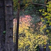 краски осени :: Евгений Фролов