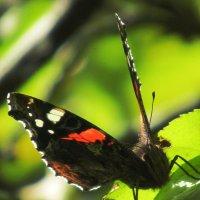 Бабочка :: Emma Smit