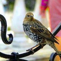 птичку отредактировала :: Dashiki