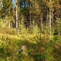 Осенний лес :: Aнна Зарубина
